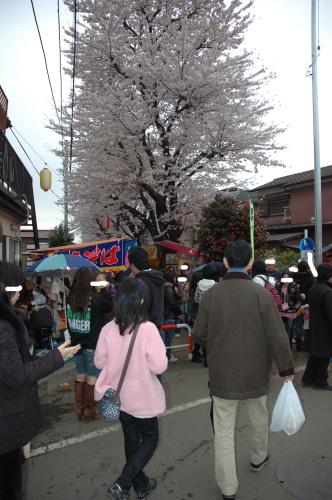 sakuramatsuri4.jpg